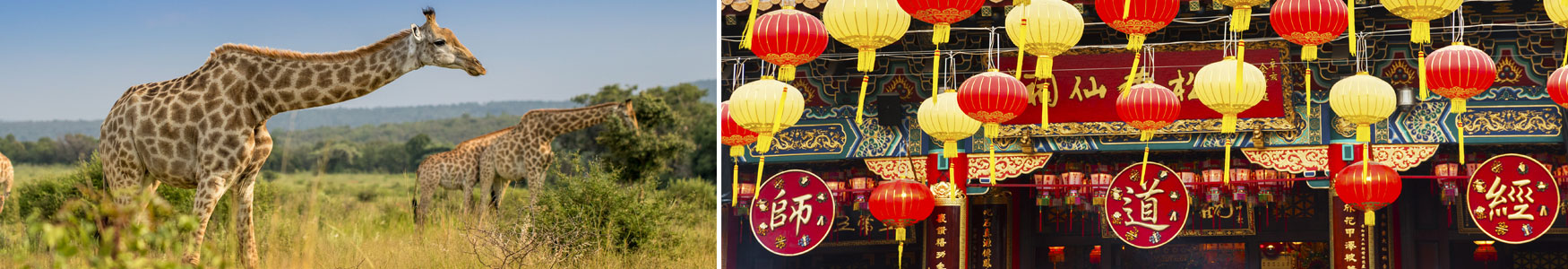 Coverage Highlights